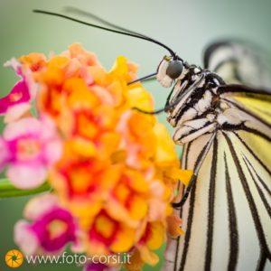 casa delle farfalle antartide