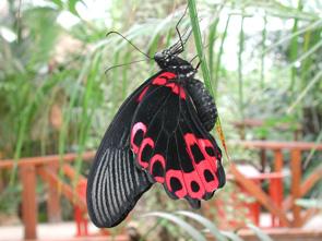 farfalle micromegamondo