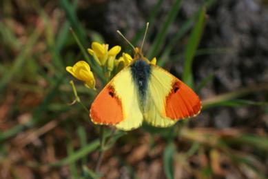 farfalle monteserra