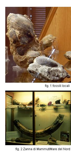 fossili montefalcone