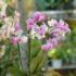 Murabilia 2015: la più bella mostra mercato di fiori del centro Italia