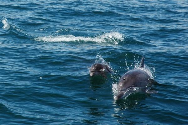 sudafrica mare