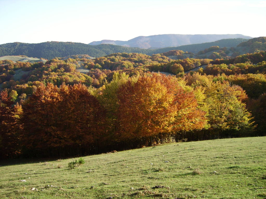 FORESTE DEL CASENTINO