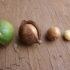 Olio di macadamia: usi e proprietà (le guide)