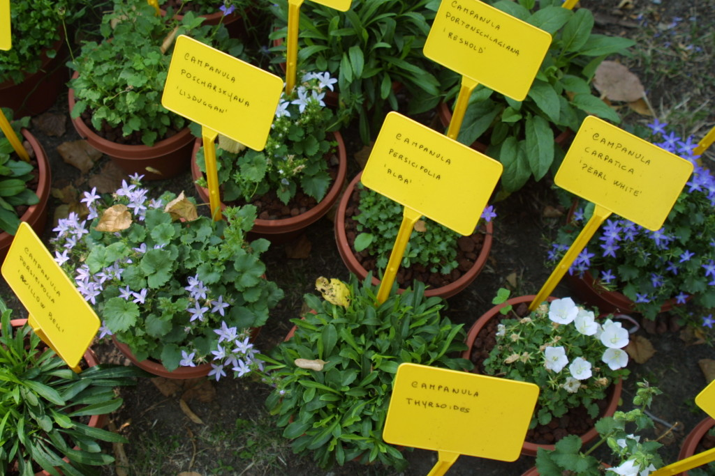 appuntamenti verdi erbe aromatiche