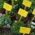 Gli appuntamenti d'aprile 2016, per l'orto e il giardino