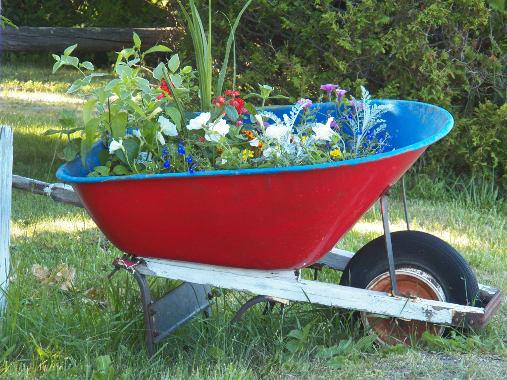 Fiori Da Piantare Nell Orto tutti i fiori utili annuali da seminare nell'orto - stile