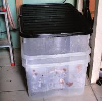 compostiera fai da te lombrichi