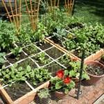 La lotta biologica nell'orto di giugno