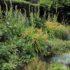 6 piante per il terreno argilloso (le guide)