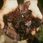 20 tipi di concime organico autoprodotto (le guide)