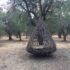 Parco Paduli: vacanza romantica sotto foglie e canne