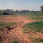 Stanchezza del terreno : dal sovescio alla rotazione