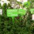 La lotta biologica nell'orto di ottobre