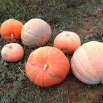 La lotta biologica nell' orto di novembre