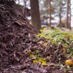 I preparati biodinamici da aggiungere al compost