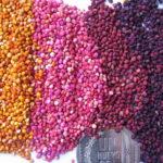 Quinoa ricette: 6 idee veloci e gustose