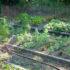 La lotta biologica nel giardino e nell' orto di dicembre