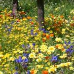 I preparati biodinamici: dal 502 e 507 (la guida)