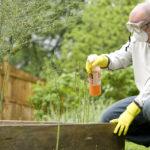 La lotta biologica  nell' orto di gennaio (le guide)