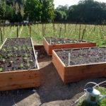 Come preparare l'orto e il giardino per la primavera