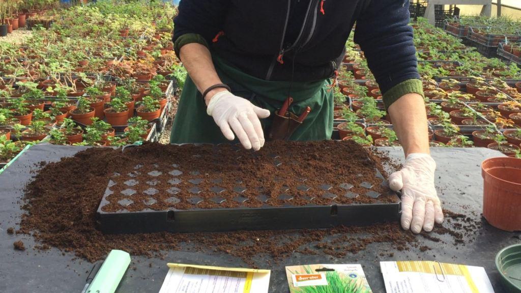 2 preparazione del terreno  erbe aromatiche