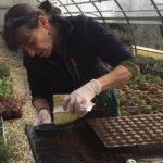 Erbe aromatiche: la scelta dei semi