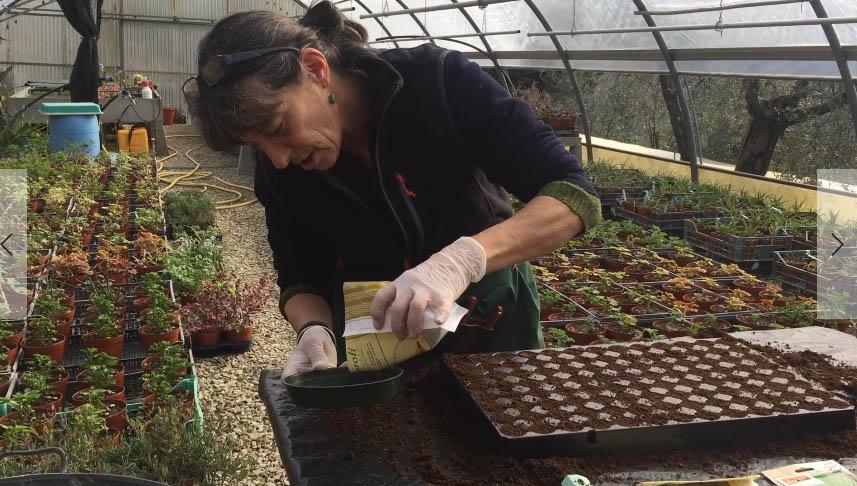 3 preparazione del seme  erbe aromatiche