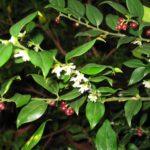 5 piante profumate per il giardino invernale (le guide)
