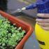Diserbante biologico: scopri i 20 metodi contro le malerbe! (Le guide)