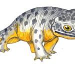 Anfibio_fossile_di_dinosauro