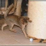 _Utilizzare_i_fogli_di_alluminio_per_creare_un_gioco_per_gatti