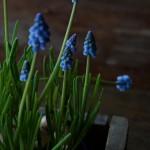 dana_garden_design